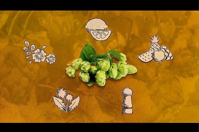 Mit dem Hopfen wächst die Biervielfalt